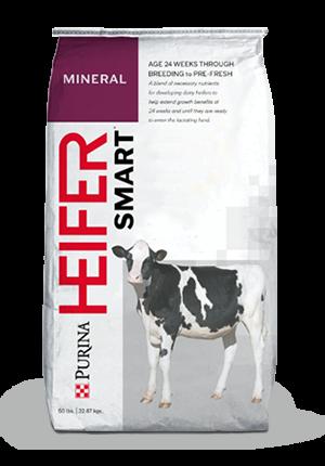 Dairy Cow Feeds Flat Bottom