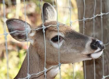 Deer Fence Netting