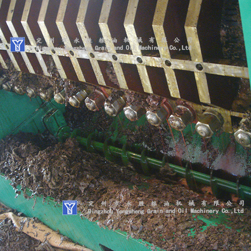 cotton seeds oil pressing machine