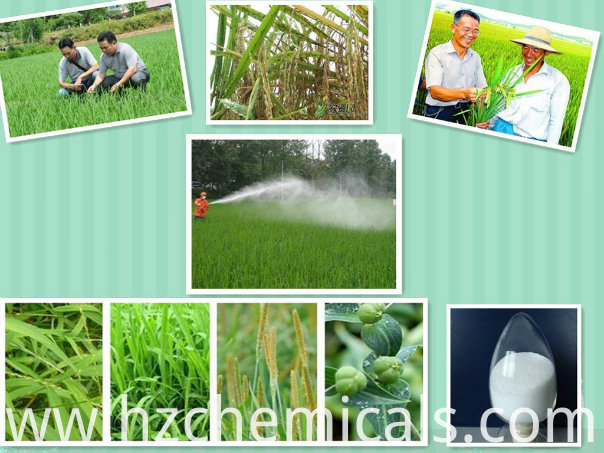 Agricultural Chemicals Herbicide Tc Technical 97% CAS: 137641-05-5 Picolinafen